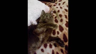 Funniest moments of family cat - Video