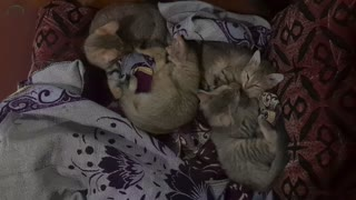 Funny Cats and Cute Kittens Playing