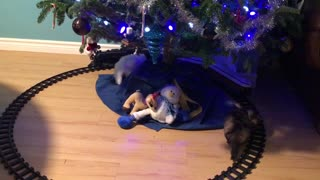 Kittens and Christmas train - Video
