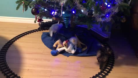 Kittens and Christmas train