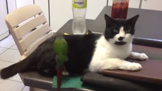 Cat Enjoys Being Comfortably Groomed By Bird