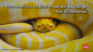 Dangerous Snakes | Rare Animals - Video