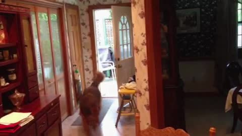 Zeus the dog opens and closes the door