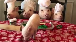 Piglets in the Kitchen - Video