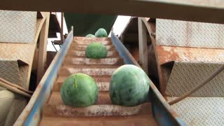 water Mellon cutting process by machine amazing  - Video
