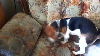 Gotta hide the treat! - Video