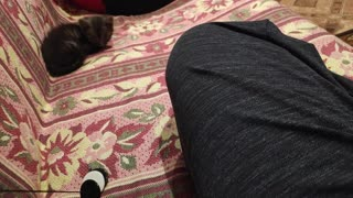 A kitten plays with buttons on a string.