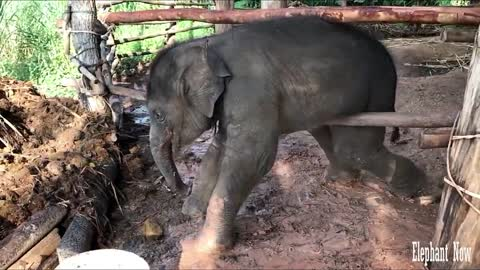 Elephant Hardly Come Out Of This Predicament
