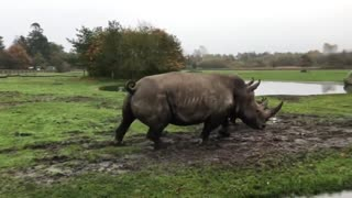 Savannah first came out on the big Savannah with mom mazumba. - Video