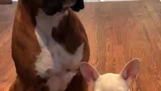 Brown dog grabs other other dog