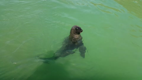 Seal begs for a fish