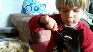 Toddler And Kitty Show That Sharing Is Caring  - Video