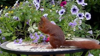 squirrel and seeds, not nuts..