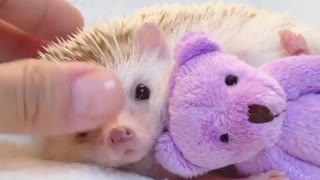 hedgehog sitting next to elephant doll