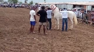 Controlling a horse  - Video