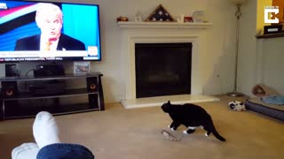 Cat doesn't like Trump - Video
