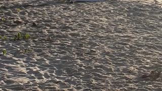 A man in black wet suit stretching on beach - Video