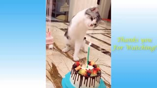 funny dogs and cats video compilation #1