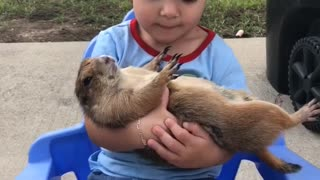 Little girl preciously cuddles her prairie dog