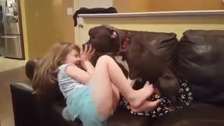 Pit Bull shares giggly smooch session with little girl - Video