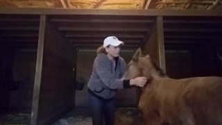 Super affectionate foal wants more scratches