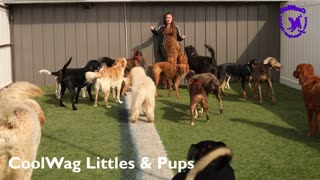 Coolwag video clips of the Day of the Best Dogs on Earth 2/24/2021