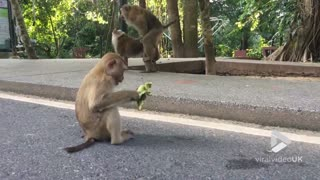 Monkey's daily routine - Video