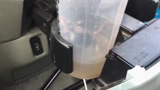 Woman Finds a Mouse in her Car - Freaks Out! - Video