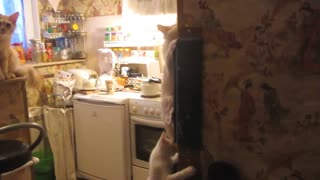 Cat teaches kittens to scramble - Video