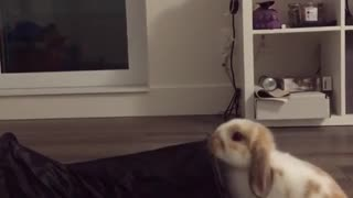 Bunny magician performs mind blowing trick