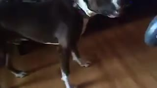 Dog is afraid of walkie talkie