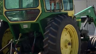 Baby goat climbs on top of tractor, can't figure out how to get down