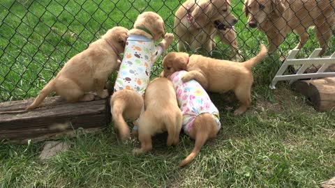 Puppies have pajama party before going to their forever families