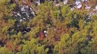 Dog Somehow Climbs to Top of Tree