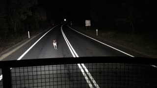 Speedy Kangaroo - Video