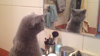 Cat admires himself in the mirror - Video