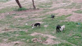 Friendship of dogs playing with each other and enjoying