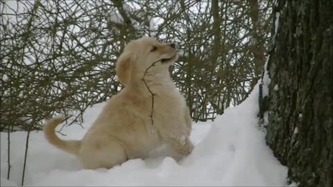 Nine Puppies Get A Chance To Play In The Snow For The 1st Time, Here's What Happened