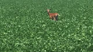 Cute young deer having lunch. - Video