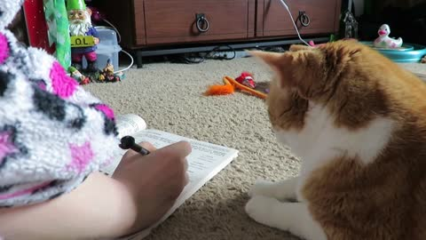 Talented Cat Solves Owner's Crossword Puzzle By Insinuating The Answer