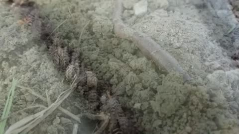 Worm time lapse
