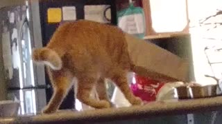 Cat Wipes Out Trying to Get Bag Off Head On Counter - Video