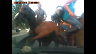 Horses get too Close for Comfort - Video