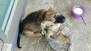 Friendly Kitty Gives Puppy Some Love