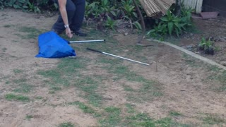 Venomous Eastern Brown Snake Captured in Residential Backyard - Video