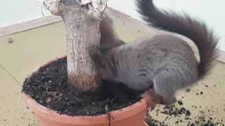 Rescued squirrels make enormous mess in home - Video
