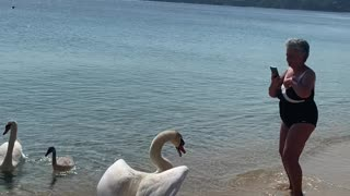 Swan Scares Lady into the Sea