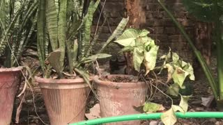 son of cat searching something in garden  - Video