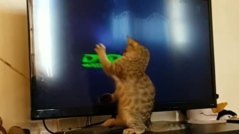 Playful kitten tries to catch moving logo on TV