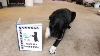 Dog helps out with pregnancy announcement